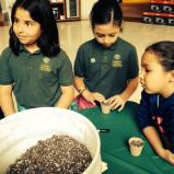 Planting seeds of sustainability at Abt Electronics